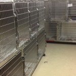This is a picture of our small to medium size cages.